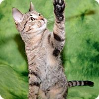 Adopt A Pet :: Bronson - Salt Lake City, UT
