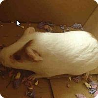 Adopt A Pet :: *Urgent* Winter - Fullerton, CA