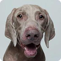 Adopt A Pet :: Manning - Birmingham, AL