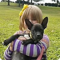 Adopt A Pet :: Amelia Earhart - Charlotte, NC
