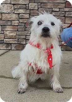 Jack Russell Terrier Mix Dog for adoption in Pulaski, Tennessee - Queenee