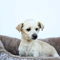Adopt A Pet :: Ernie - Auburn, CA