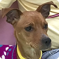 Adopt A Pet :: Zelda - Evansville, IN