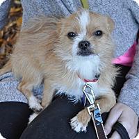 Adopt A Pet :: Rudy - Atlanta, GA
