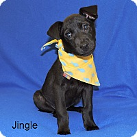Adopt A Pet :: Jingle - Slidell, LA