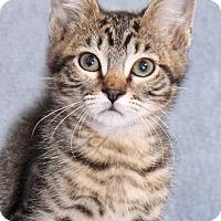 Adopt A Pet :: Hey Hey - Encinitas, CA