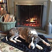 Adopt A Pet :: Bernie - Harrisonburg, VA