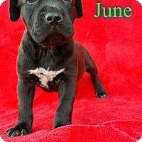 Adopt A Pet :: June - Pensacola, FL