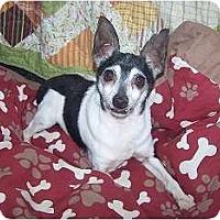 Adopt A Pet :: Macho  VERY TINY - Antioch, IL