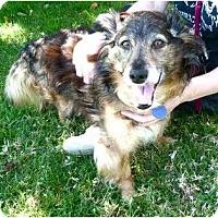 Adopt A Pet :: Jumpin' Jack Flash - La Habra, CA