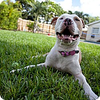 Adopt A Pet :: Pinky - Lake Worth, FL