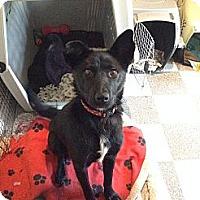 Adopt A Pet :: Ginny - Saskatoon, SK