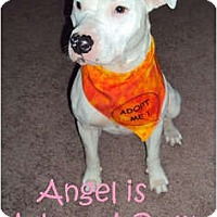 Adopt A Pet :: Angel (DEAF) - Indianapolis, IN