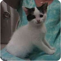 Adopt A Pet :: Deidre - Reston, VA