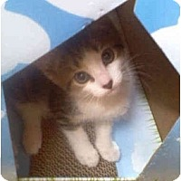Adopt A Pet :: Bubbles - Colmar, PA