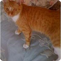 Adopt A Pet :: Trace - Monroe, GA