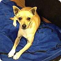 Adopt A Pet :: Peanut - Red Bluff, CA