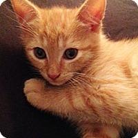 Adopt A Pet :: Sundance - N. Billerica, MA