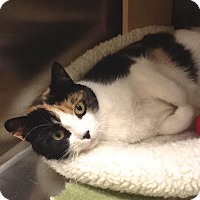 Adopt A Pet :: Trinity - Colmar, PA