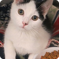 Adopt A Pet :: Lucy - Brockton, MA