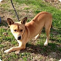 Adopt A Pet :: CHANEY - Bedminster, NJ