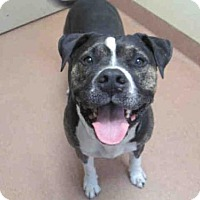Adopt A Pet :: Buster A1658242 is in danger at San Diego - Beverly Hills, CA