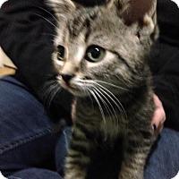 Adopt A Pet :: Loki - Caistor Centre, ON