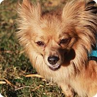 Adopt A Pet :: Nolan - Gilbert, AZ