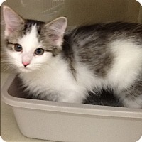 Adopt A Pet :: Sweet Pea - Warren, OH