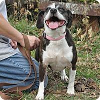 Adopt A Pet :: Georgia - Poughkeepsie, NY
