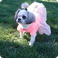 Adopt A Pet :: Betty Boop - Las Vegas, NV