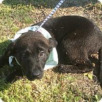 Adopt A Pet :: Fonzie - Albany, NY