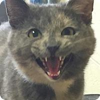 Adopt A Pet :: Mia - Kensington, CT