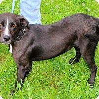 Adopt A Pet :: Donna - Sparta, NJ