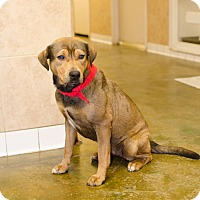 Hound (Unknown Type)/Labrador Retriever Mix Dog for adoption in Poteau, Oklahoma - GENNY