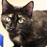 Adopt A Pet :: Nita - Staunton, VA