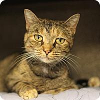 Adopt A Pet :: Torina - Midland, MI