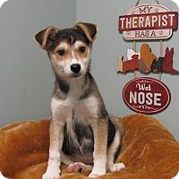 Adopt A Pet :: Bean - Groton, MA
