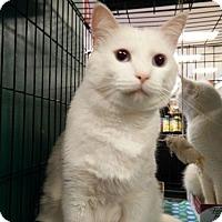 Adopt A Pet :: Blake & Jack - Avon, OH
