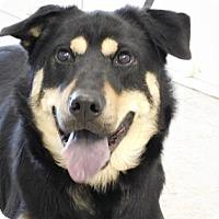 Adopt A Pet :: Tye - Freeport, IL