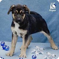 Adopt A Pet :: HOGAN - Tomball, TX