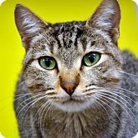 Adopt A Pet :: Milo - Fort Smith, AR