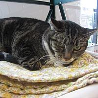 Adopt A Pet :: CoCo - Kingston, WA