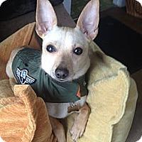 Adopt A Pet :: Stitch aka poppy - Hollis, ME