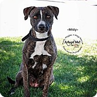 Adopt A Pet :: Misty - Scottsdale, AZ