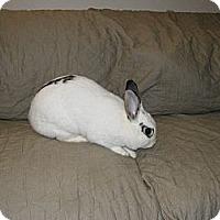 Adopt A Pet :: Daria - Conshohocken, PA