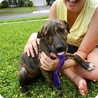 Adopt A Pet :: Nyna - South Jersey, NJ