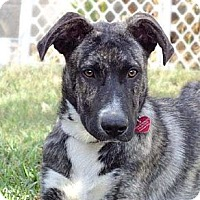 Adopt A Pet :: KANE - Torrance, CA