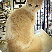 Adopt A Pet :: Beuregard - Seminole, FL
