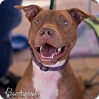 Adopt A Pet :: TUCKER - Scottsdale, AZ